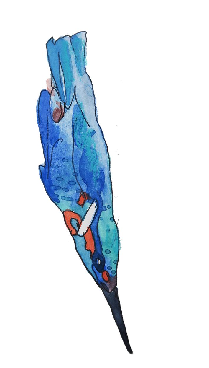 oiseau Timbuktoo 4